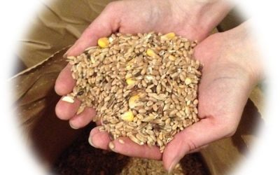 Selection de graines du Moulin du Kronthal - vuparici