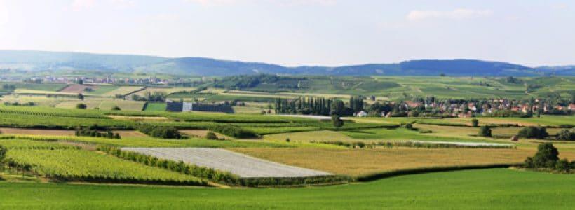 Un vue sur le vignoble de la Couronne d'Or en Alsace à Dangolsheim