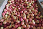 Pomme et santé vont de pair