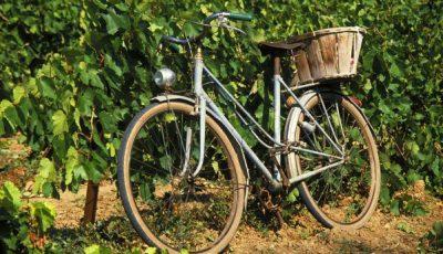 Un vélo posé sur une vigne en Alsace