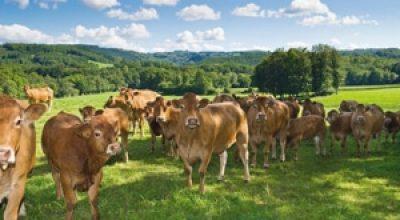 Un élevage pour la vente directe à westhoffen