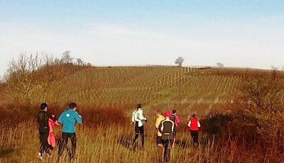 Trail a travers les vignes en Alsace